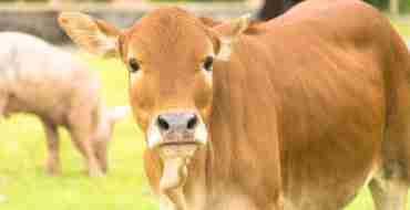 Leaving the EU - Animal Welfare Standards