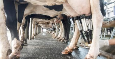 Northern Ireland dairy farmers