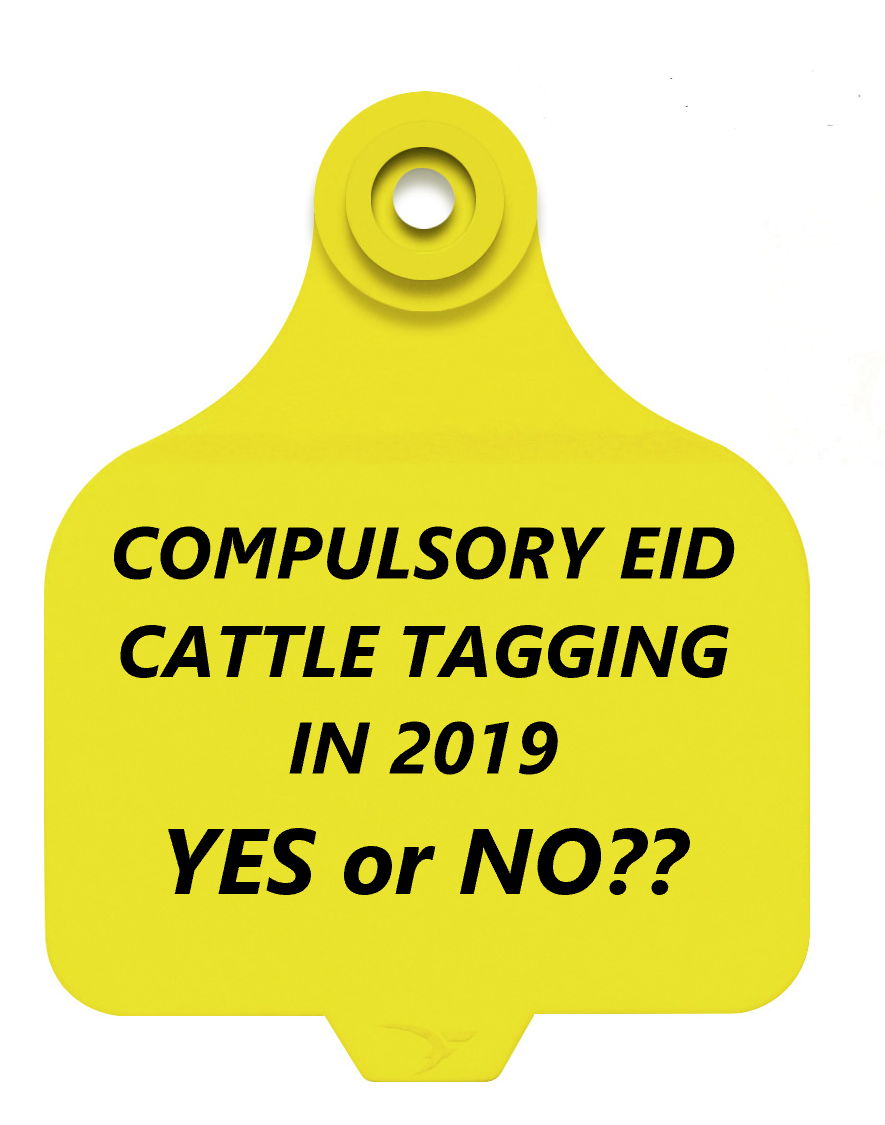 EID Cattle Tagging YES OR NO
