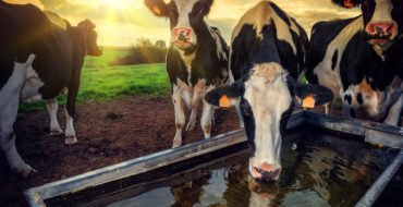 Cut farm inputs by improving water efficiency