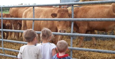 Farm day nursery - cows