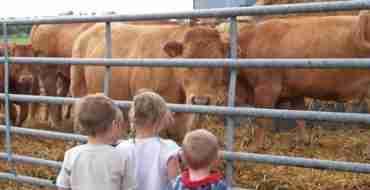 Farm day nursery - cows