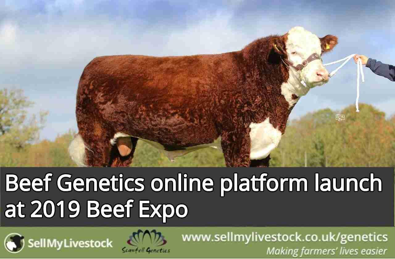 Beef Genetics online platform launch at 2019 Beef Expo