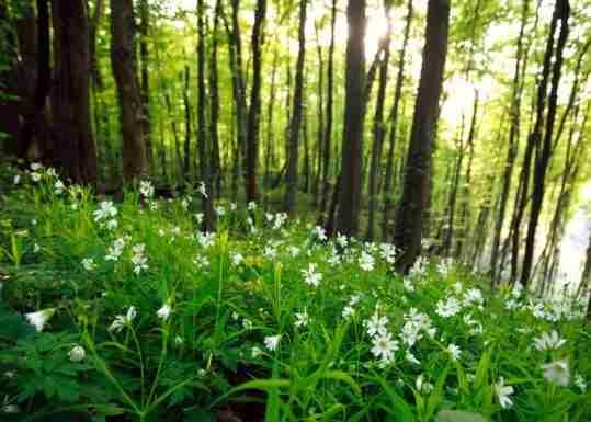 Agri-Environment Schemes